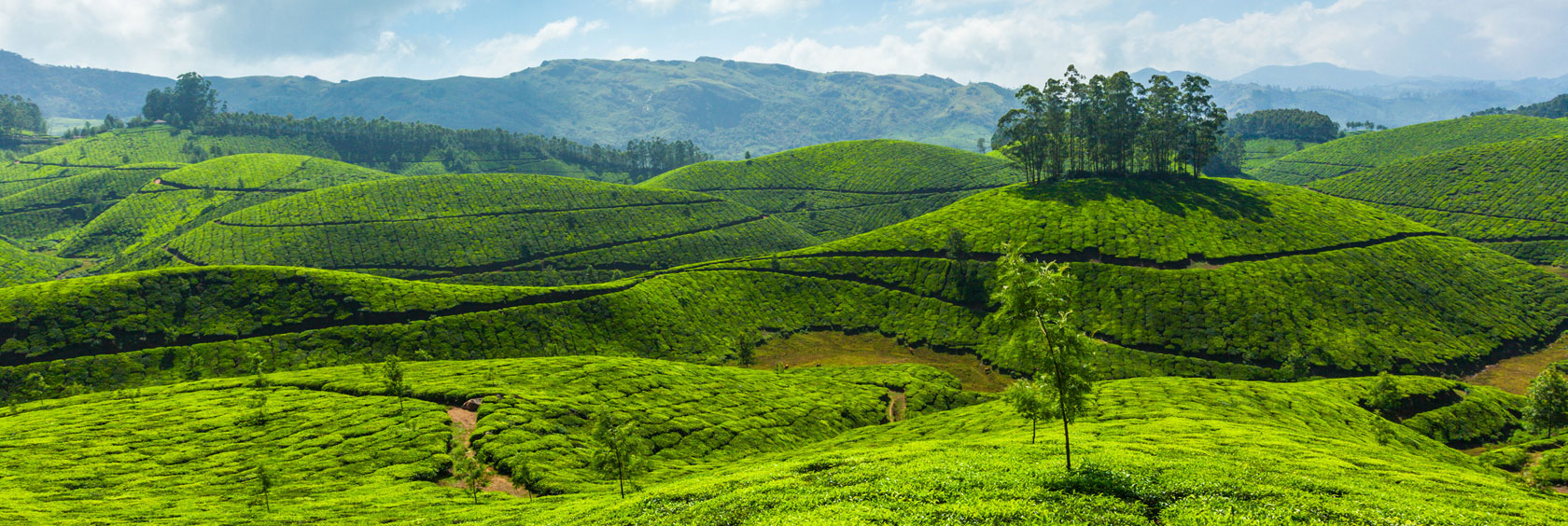 Tour-Package-Munnar